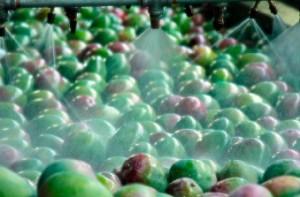 Procedimiento para tratar la fruta post cosecha
